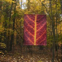 Red Leaf banner i nfall