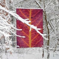 Red leaf banner in winter