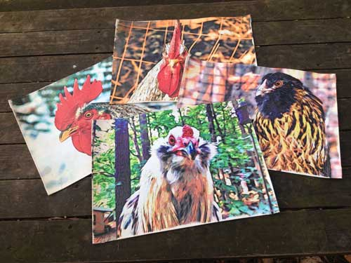 Chicken portrait placemats