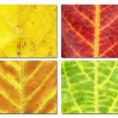 Leaves place mats #1