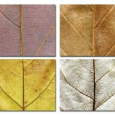 Leaves place mats #2