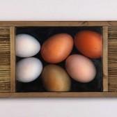 Half Dozen Eggs and Russian Olive Branches