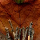 Leaves after El Greco