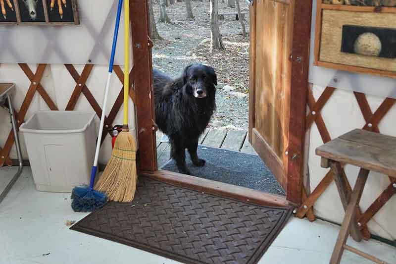 Maggie in the Door